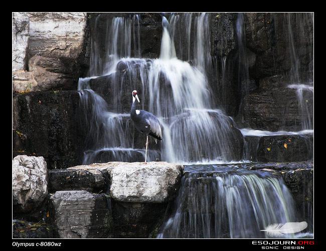 北京动物园 下