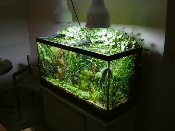 以降低光照限制水草和藻类的成长